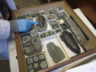 1_drawer_of_fossil_trilobites