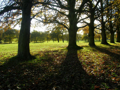 Autumn-at-Wollaton-Park-autumn-in-the-park-1-scaled