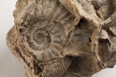 wollaton-hall-park-learning-education-hub-fossil