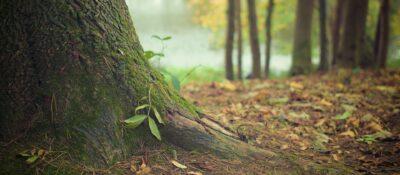 tree-569275_1920-e1623228939988